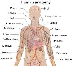 jamb subject combination for anatomy
