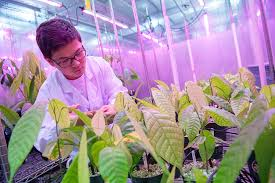 Accurate JAMB Subject Combination for Plant Science and Biotechnology
